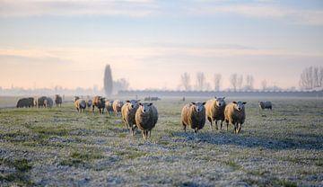 die Schafbande von Tania Perneel