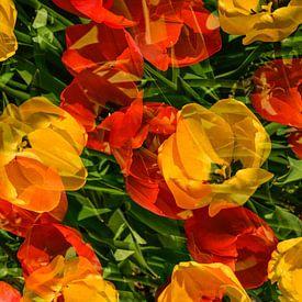 Rouge, jaune et vert ! sur Monique van Velzen