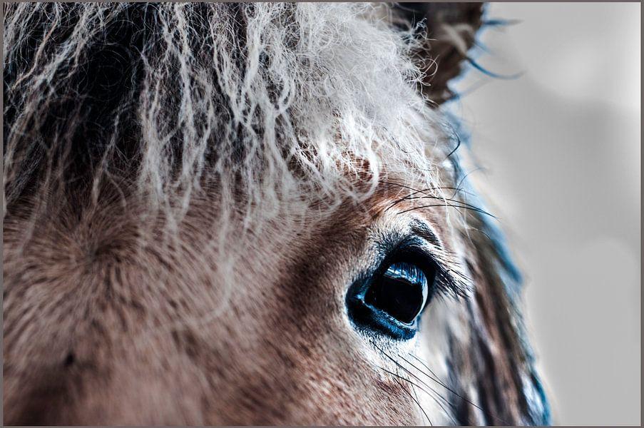 paard van Edwin Hunter
