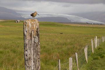Vogel op paal van Ewan Mol