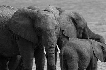 Elefanten von GoWildGoNaturepictures