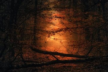 Herbstsonne bricht durch die Bäume von Jos Reimering