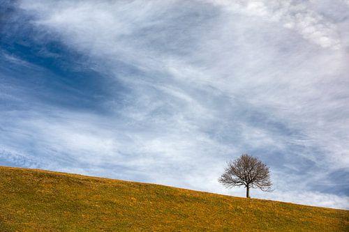 Einsamer Baum von