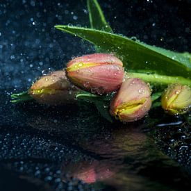 Tulpen von Tilo Grellmann