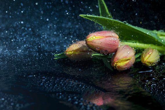 Tulpen van Tilo Grellmann