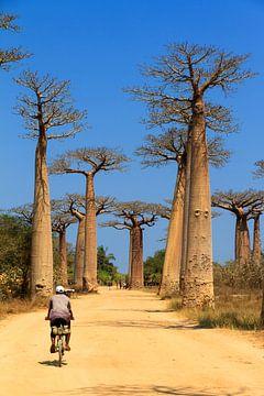 Baobab fietser von Dennis van de Water