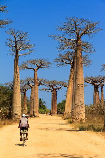 Baobab fietser van Dennis van de Water