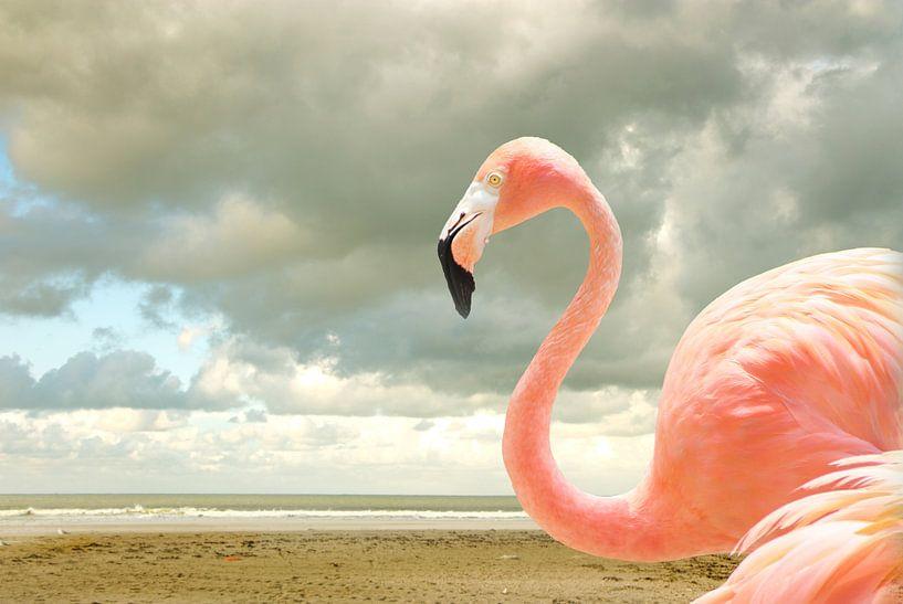 Proud to be pink van Adriana Zoon