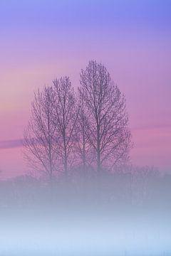 dageraad mist over het grasland van Marcel Derweduwen