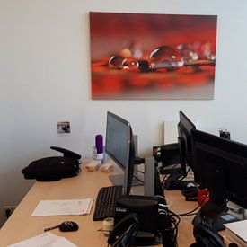 Klantfoto: Red sparkling van Carla Mesken-Dijkhoff, op canvas