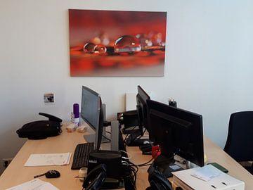 Klantfoto: Red sparkling van Carla Mesken-Dijkhoff