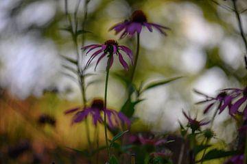 abstracte echinacea van Tania Perneel