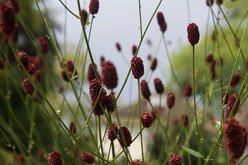 Natur, Pflanze, Blume von Alexandra Verkerk