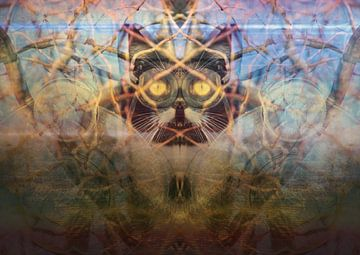 Katten hebben de aarde overgenomen van Andreas Schulte