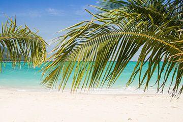 Tropischer Strand mit Palmenbäumen von Marjan Schmit Visser