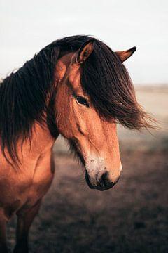 Elegantes Pferd in Island während der Mitternachtssonne von Bjorn Snelders