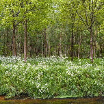 Noorderbos in bloei