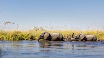 Afrikaanse olifanten (Loxodonta) in het water van Remco Donners
