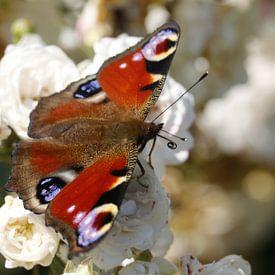 Dagpauwoog vlinder op roze roosjes van Cora Unk