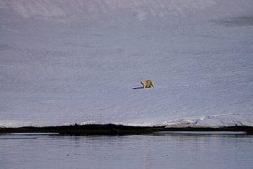 Finden Sie den Eisbären von Merijn Loch