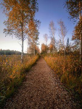 Sonniger Herbstag von Thomas Weber