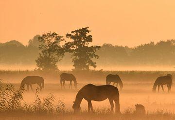 Paarden bij zonsopkomst von Jitske Van der gaast