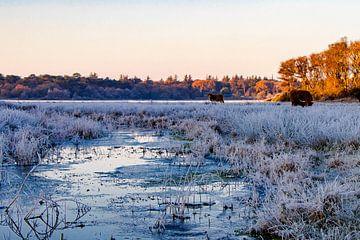 Winters landschap von Dick Hooijschuur