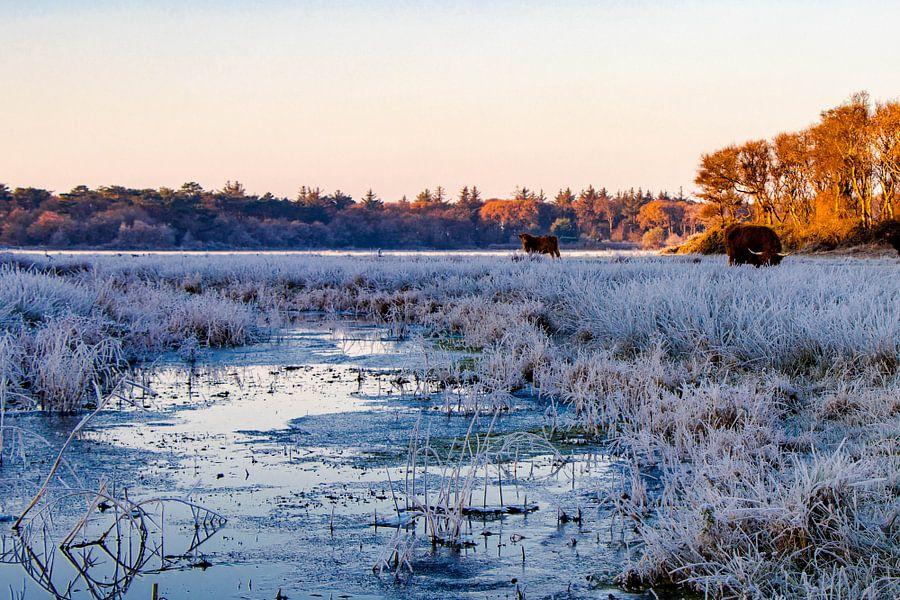 Winters landschap van Dick Hooijschuur