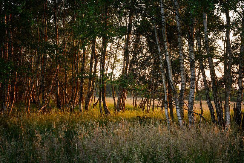 Das Gildehauser Venn in der Abendsonne von Edith Albuschat