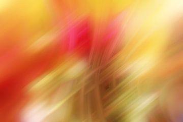 gelb rot van Dagmar Marina