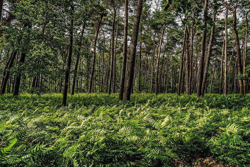 Leyense Bos van Hans Lebbe