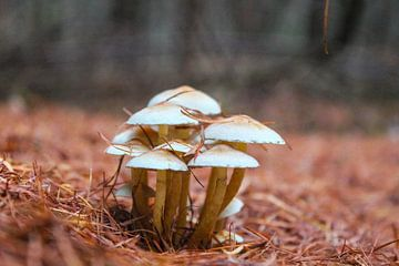 Groepje paddenstoelen van Leonie .