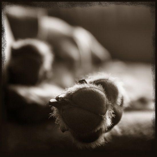 Pootje van Mogi Hondenfotografie