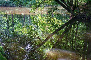 Spiegelung im ruhigen Wasser