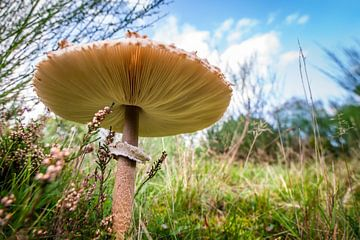 Herfstpaddenstoel von Erwin van den Berg