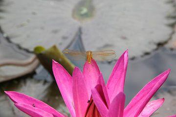 Libelle op  waterlelie Inonesië Java van Ruud Wijnands
