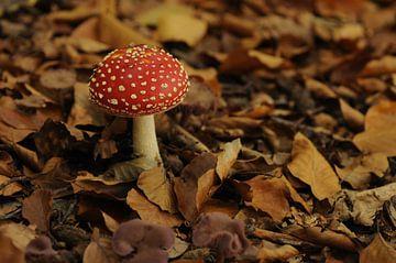 Mushroom van Lynn Finch
