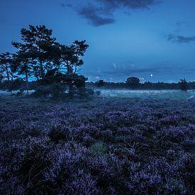 Heideveld tijdens blauwe uur van Dannis van der Heiden