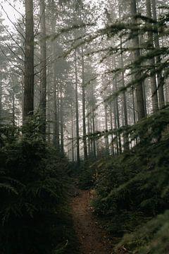 Nebliger Wald Veluwe von Eke Salomé