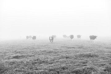 Mistige morgen. von Jordy Kortekaas