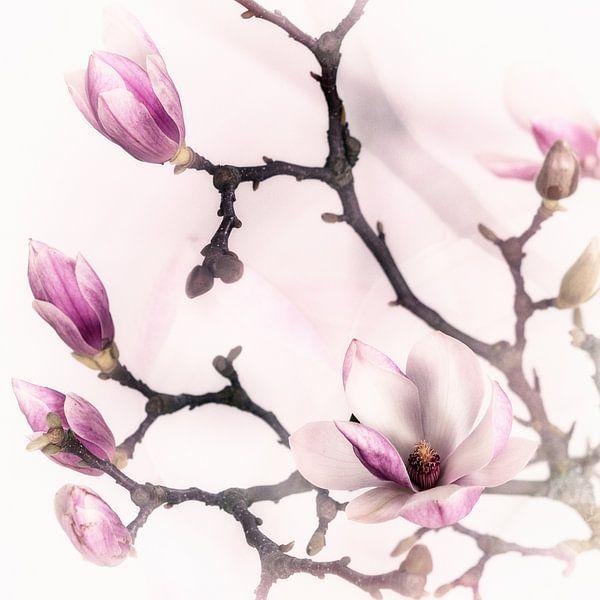 magnolia van MadebyGreet