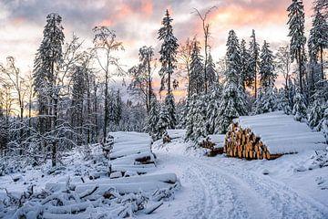 Chemin forestier dans la neige et au coucher du soleil