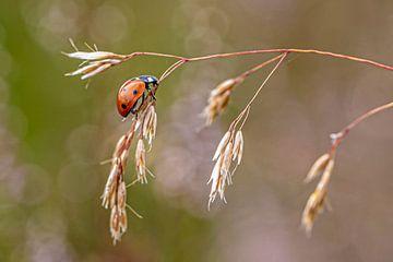 Lady bug van Frames by Frank