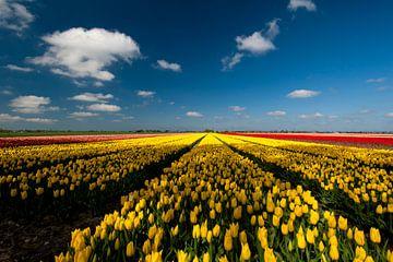 Bollenstreek - gele en rode tulpen - Nederland van Jeroen(JAC) de Jong