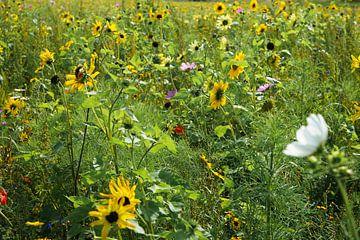 prachtig bloemenveld van Angelique Rademakers