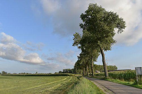 Bomen langsweg Aarle