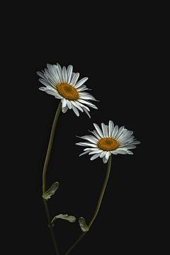Flower power! von Elianne van Turennout