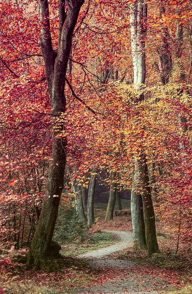 Herfstsymphonie van Lars van de Goor