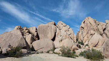 Joshua Tree Nationaal Park, Californië, USA van de Roos Fotografie