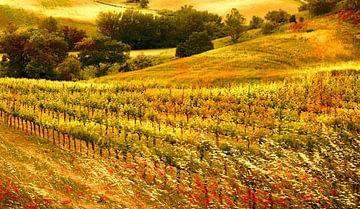 Tuscan wineyard van Adrien Hendrickx